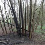 Flächenbrand Minfeld K16 am 15. April 2012 4