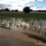Unwetter-Einsatz am 11.06.2012 4